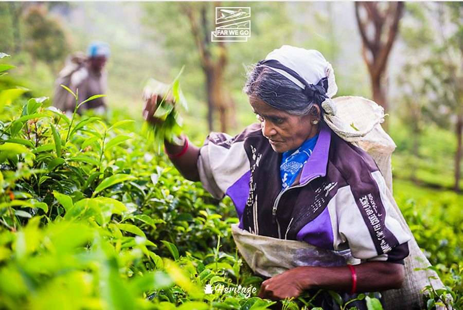 Sri Lanka – Quê hương của trà Ceylon
